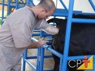 Definição de inseminação artificial em bovinos #alcanceosucesso