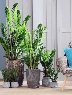 Amazing Unusual Plants To Grow In Your Garden Garden Design, Office Plants, Bulb Flowers, Green Plants, Plant Decor, Big Indoor Plants, Unusual Plants, House Plants Decor, Indoor Plants