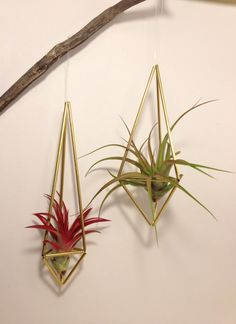 (DIY idea) air plant in brass himmeli sculpture by mossterrarium on Etsy, $20.00