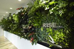 rise offices - Wall(http://wall.ac)