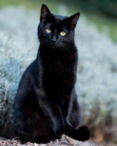 Fun in the garden this evening Claudette looking rather purrfect #blackcatstellall #black_cat_crew