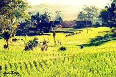 bungbulan southern garut west java indonesia