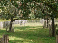 Love Garden, Dream Garden, Amazing Gardens, Beautiful Gardens, Landscape Design, Garden Design, Orchard Design, Parcs, Edible Garden