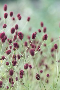 Permaculture, Plant Design, Garden Design, Beautiful Gardens, Beautiful Flowers, Planting Plan, Edible Flowers, Edible Garden, Flowers Nature