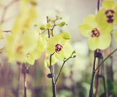 Orchids are one of my favorite flowers!