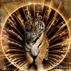 GIFS: 38 Imágenes Animadas de Hermosos Tigres - 1000 Gifs Beautiful Fantasy Art, Beautiful Cats, Animals Beautiful, Cute Animals, Tiger Images, Tiger Pictures, Big Cats, Cool Cats, Tiger Spirit Animal