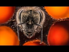 An Extraordinary Glimpse into the First 21 Days of a Bee's Life in 60 Seconds | Colossal