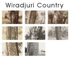 Carved trees of First Nations Peoples from Western New South Wales Aboriginal Symbols, Aboriginal Culture, Aboriginal People, Aboriginal Art, Australian Aboriginal History, Tree Carving, Forts, My Heritage, South Wales