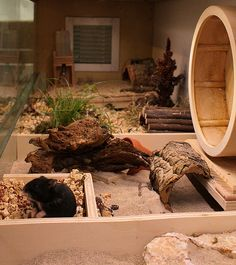 natural environment cage for hamster Great! Now I want a hamster! Cage Hamster, Gerbil Cages, Hamster Care, Hamster Toys, Hamster Stuff, Pet Mice, Pet Rats, Chinchillas, Habitat Du Hamster