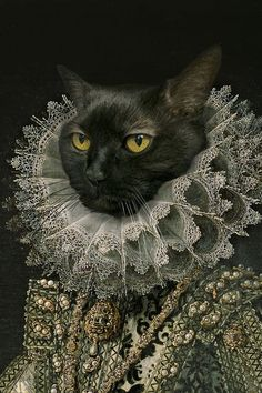 Arte Peculiar, Dog Artwork, Fancy Cats, Pet Costumes, Whimsical Art, Surreal Art, Cat Art, Pet Portraits, Art Inspo