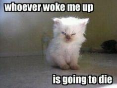 Cute =D this is totally how i feel!!!! sometimes i want to smash my alarm clock in half!!!!!