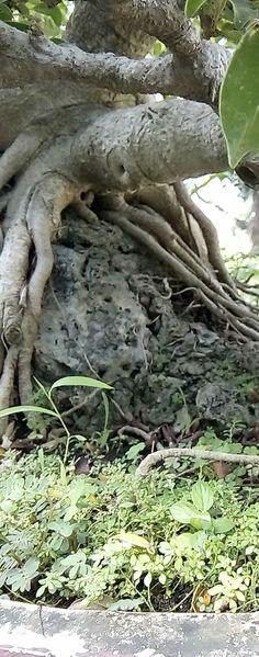 A tree it is cute