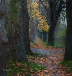 Autumn Trees - Pathway Ilidza, Sarajevo, Bosnia
