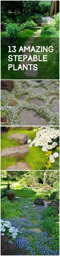 Amazing Stepable Plants Stepable plants stepable garden plants popular pin gardening flowers yard and landscaping ground cover plants fast growing ground coverStepable pl. Ground Cover Plants, Garden Inspiration, Plants, Backyard Garden, Planting Flowers, Backyard Landscaping, Lawn And Garden, Garden Paths, Garden Design