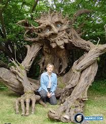 unusual trees of the world - Google Search