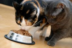 Why your cats may not be getting along - Cat Behavior Associates