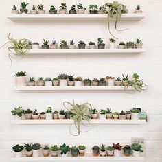 100 Beautiful DIY Pots And Container Gardening Ideas Plant Wall, Plant Decor, Indoor Garden, Indoor Plants, Gravel Garden, Hanging Plants, Air Plants, Decoration Plante, Plants Are Friends