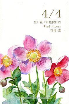 每日一花 4.4生日花:红色秋-Haru. Hello.