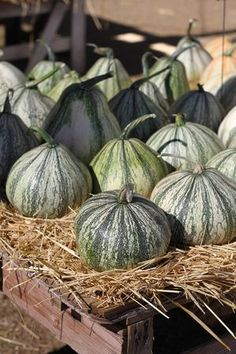 Green pumpkins and gourds add more color to your fall decor