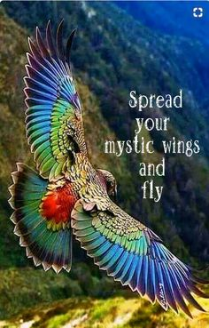 #Spread your mistic wings and fly..