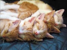 Funny Animal Pictures - View our collection of cute and funny pet videos and pics. New funny animal pictures and videos submitted daily. Cute Kittens, Cats And Kittens, Tabby Cats, Sleeping Animals, Cat Sleeping, Sleeping Babies, Baby Animals, Funny Animals, Cute Animals