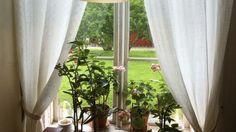 Am Nordfenster ist es für einige Pflanzenarten zu dunkel, doch deswegen müssen Sie nicht auf Zimmergrün verzichten.