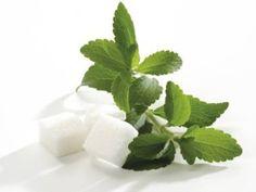 Stevia: sluipmoordenaar of reddende engel?