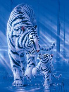 White tiger - Painting Art by Kentaro Nishino - Nature Art & Wildlife Art - Airbrushed Wildlife Art. Tiger Images, Tiger Pictures, Animal Pictures, Animals And Pets, Baby Animals, Cute Animals, Big Cats Art, Cat Art, Beautiful Cats