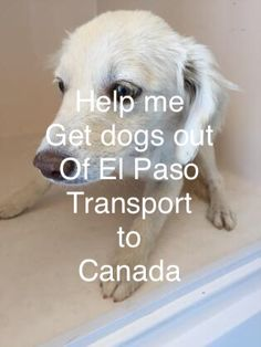 I am thinking of starting a go fund me to transport adoptable dogs to Ontario, Canada to be adopted. Have no idea how to do it . Just want to do more...Di Harnden