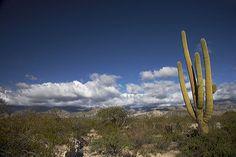 Cactus, Atacama desert, Argentina.