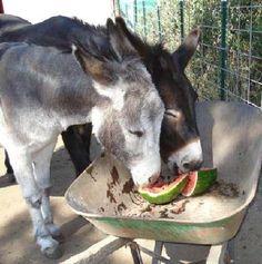 Lavender Dreams Farm & Donkey Rescue©