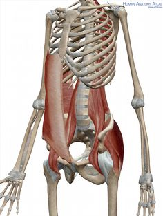 Your Core Muscles – Deeper Than You Think