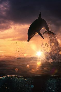 Happy Dolphin! Awesome scenery