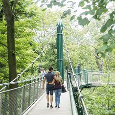© Daniel Zupanc Tiergarten Schönbrunn, Flora Und Fauna, Brooklyn Bridge, Travel, Kinds Of Birds, Amphibians, Great Tit, Carp, Trout