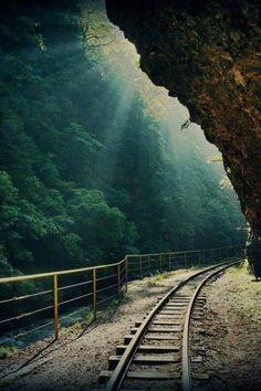 Forest tracks Columbia Gorge.Oregon