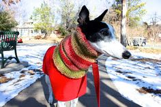 Bromeleighad: Knitting and Nature: Greyhound Cowl Knitting Pattern