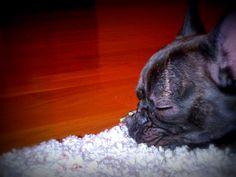 Sleeping!