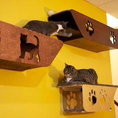 We have many more new models of cat shelf coming. Catwalkforkitty.us