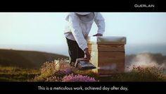 Guerlain : Ouessant, l'île aux abeilles noires