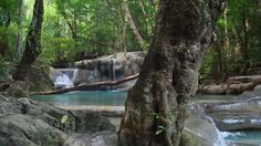 Beautiful wild rainforest with exotic tropical waterfalls and clean water river flowing among rocks and stones. Deep jungle forest with old big tree trunks, fallen branches and green plants Stock Video Footage - VideoBlocks