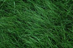 green grass top view by AlexZaitsev on @creativemarket