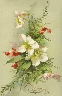 Hellebore and evergreen, Catherine Klein