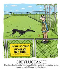 To make it work you need more than one greyhound - preferably not from the same household!