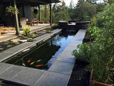 Rainbow Pond Fish - Customers Ponds