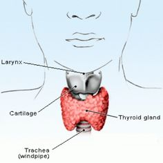 9 Herbal Remedies for Hypothyroidism