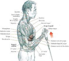 Curl de bíceps con polea