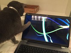 Rain likes technology too.  (Her first night in foster.)