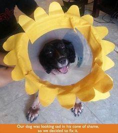 Cone of Shame Flower
