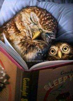 Owl tell you a bedtime story 🦉~Jolly Ollie 😊 Owl Bedding, Owl Pictures, Owl Always Love You, Wise Owl, Owl Art, I Love Books, Book Illustration, Beautiful Birds, Book Worms