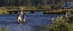 Go FISH (or hunt)